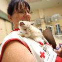 Mission Moment: Don't forget pet preparedness
